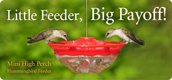 feeder bird no zoom com wild seed duncraft multi
