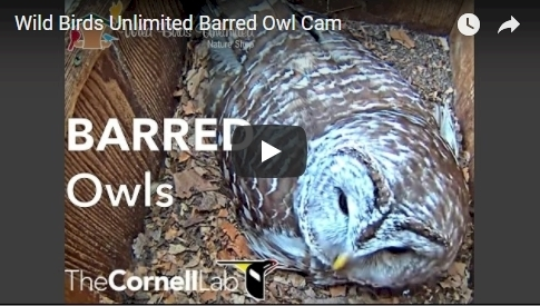 Click to launch Owl Cam